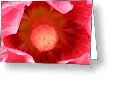 Pink Hollyhock 2 Greeting Card