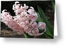 Pink Hyacinth Greeting Card