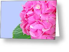 Pink Hydrangea Greeting Card