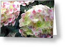 Pink Hydrangeas Greeting Card