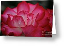 Pink Ice Greeting Card