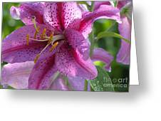 Pink Lily After The Rain Greeting Card