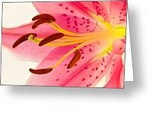 Pink Lily Square Version Greeting Card