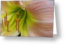 Pink Lily Up Close Greeting Card