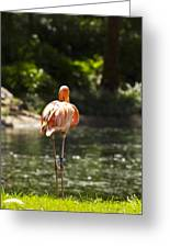 Pink Lonesome Greeting Card