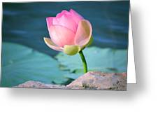 Pink Lotus 2 Greeting Card by Julie Palencia