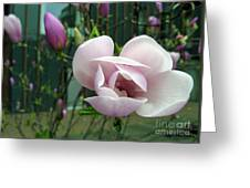 Pink Magnolia Greeting Card