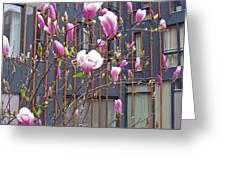 Pink Magnolia. Square Format Greeting Card