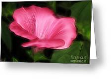 Pink Mallow Greeting Card