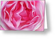 Pink March Rose 2012 Limited Edition Greeting Card