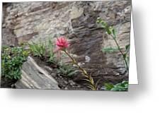 Pink Mountain Flower Greeting Card