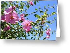 Pink Musk Mallow Greeting Card