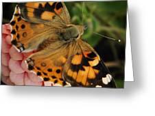 Pink N Orange Greeting Card