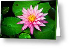 Pink Nymphaea Greeting Card