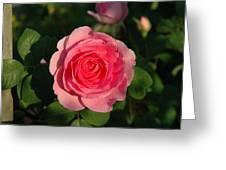 Pink Old English Rose Greeting Card