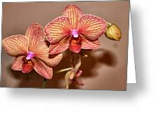 Pink Orchid2 Greeting Card