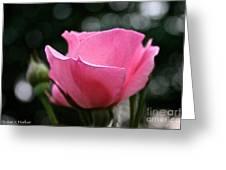 Pink Pearl Greeting Card