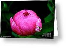 Pink Peony Bud Greeting Card