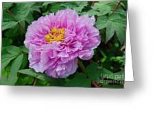 Pink Peony Flowers Series 9 Greeting Card