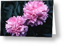 Pink Peony Pair Greeting Card
