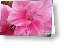 Pink Perfusion Greeting Card
