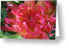 Pink Petal Flames Greeting Card