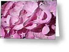 Pink Petal Pushing Greeting Card