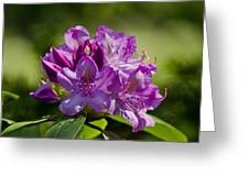Pink Petals On The Trail Greeting Card