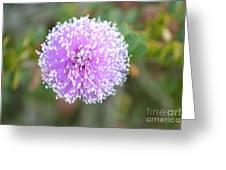 Pink Pompom Greeting Card by Saifon Anaya