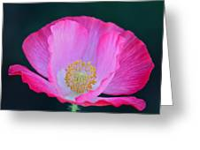 Pink Poppy 2 Greeting Card