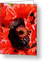 Pink Poppy Close Up Greeting Card
