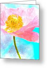 Pink Poppy On Blue Greeting Card