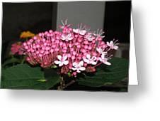 Pink Pretty Greeting Card