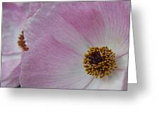 Pink Prickly Poppy Greeting Card