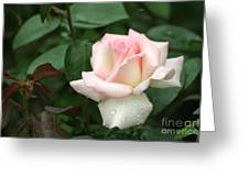 Pink Promise Greeting Card