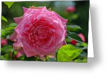 Pink Puzzled Rose Greeting Card