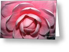 Pink Rhodendrum Greeting Card