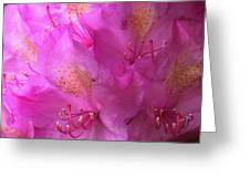 Pink Rhododendron Bloom  Greeting Card