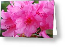 Pink Rhody Greeting Card