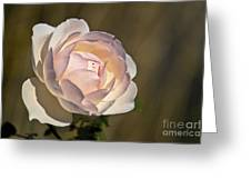 Pink Rose Blossom Greeting Card