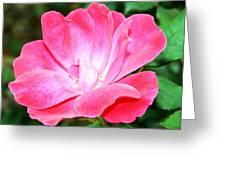 Pink Rose II Greeting Card