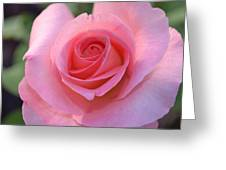 Pink Rose Greeting Card by Naomi Berhane