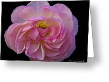 Pink Rose On Black Greeting Card
