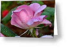 Pink Rose With Water Drops-33 Greeting Card