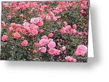 Pink Roses Canvas Greeting Card