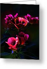 Pink Roses Of The Night Greeting Card