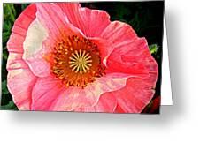 Pink Shirley  Greeting Card