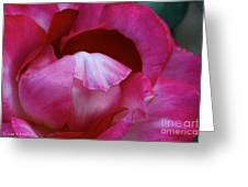 Pink Silk Greeting Card