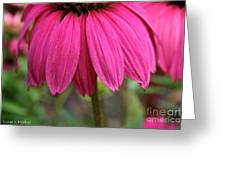 Pink Skirts Greeting Card
