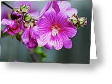 Pink Something-or-rather Greeting Card